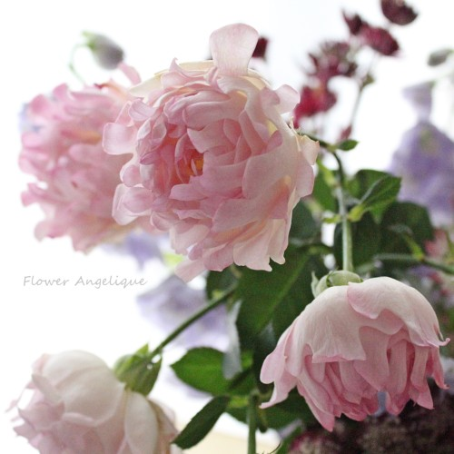 バラ 薔薇 シーアネモネ