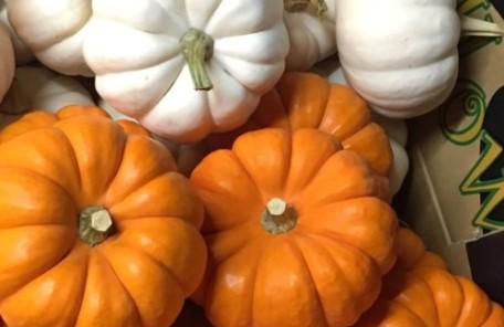 ハロウィン かぼちゃ パンプキン 花市場 レッスン 神戸 大阪 フラワーアンジェリク